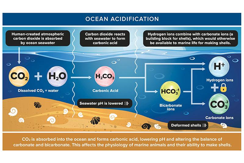 marine-pH.jpg