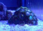 coralshots20120315-02.jpg