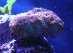 coralshots20120315-07.jpg