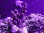 coralshots20120820-02.jpg