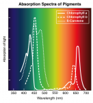 absorption spectra of pigments.png