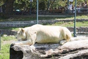Beo zoo vrt
