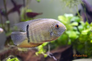 Green Severum